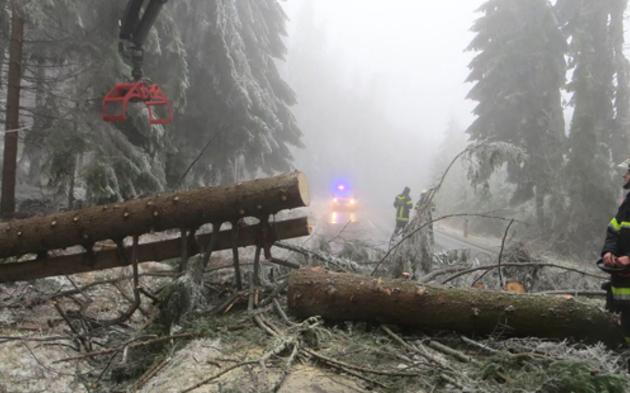 Eisschicht ließ hunderte Bäume abknicken