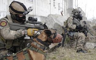 Warum wurde Soldat von Hunden zerfleischt?