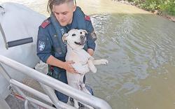 Hund ''Gidosch'' aus Donau gerettet