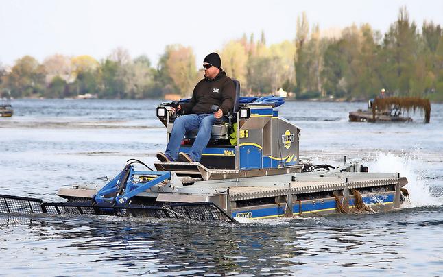Alte Donau versinkt im Pflanzen-Chaos