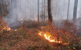 Pilot entdeckt Waldbrand im Wienerwald