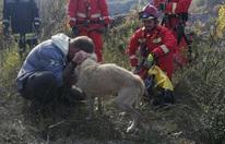 Hund nach zwei Wochen wieder gefunden: Freudentränen