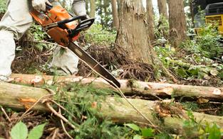 60-Jähriger bei Forstunfall verletzt