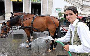 Bald hitzefrei für Fiaker-Pferde in Wiener City?