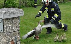 Feuerwehr auf Gänsejagd
