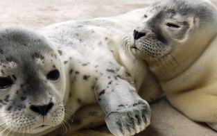 Besuch bei Seehunden & schlafen im Baumzelt