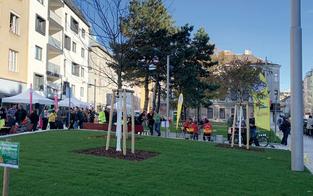 Wirbel um vier Bäume für 151.000 Euro