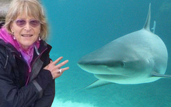 Tödliche Hai-Attacke auf schwimmende Oma