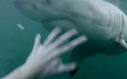 Klippenspringer landet auf Hai
