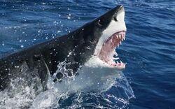 Mysteriöses Ungeheuer frisst Weißen Hai