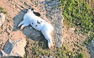 Entsetzen über Massensterben der süßen Kaninchen am Handelskai
