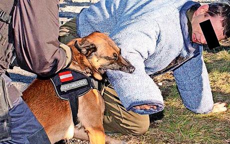 'Killer-Hund' schnappte schon einmal zu