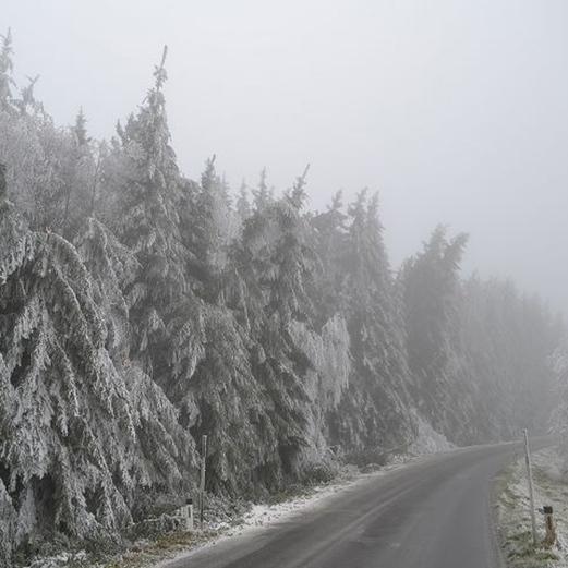 Bäume stürzen durch Eisbruch um