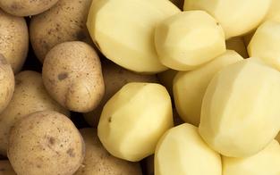 Kartoffel-Lagerbestände gehen zu Ende