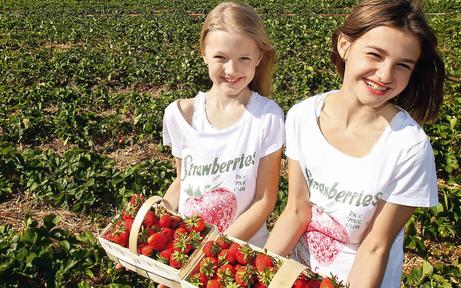 Niederösterreich stürmt auf die Erdbeer-Felder