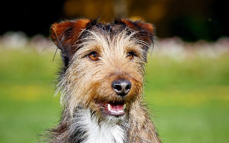 Hundehasser legen vergiftete Knackwurst aus