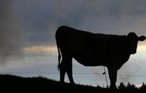 Wanderin im Lungau von Kuh attackiert