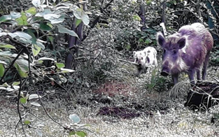 Erhöhte Gefahr: Jagdverband warnt vor Wildunfällen
