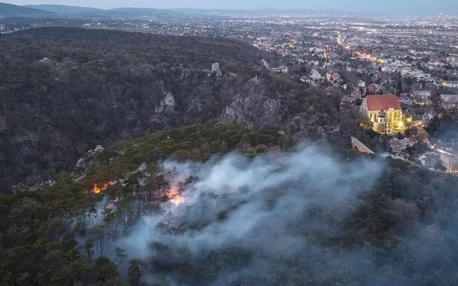 Feuerwehreinsatz wegen Waldbrand bei Mödling
