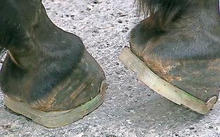 Gummi-Hufeisen für Fiaker und Polizei-Pferde