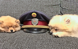 Alle wollen die ''Polizei-Welpen'' haben