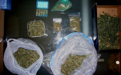 Polizei stellte Cannabispflanzen sicher