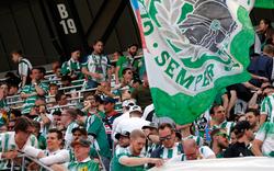 Studie: Rapid bleibt beliebtester Verein