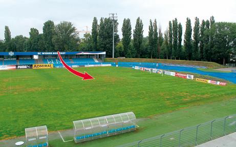 Ein Rasenpilz legt Stadion Wr. Neustadt lahm