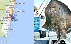 """""""Monster""""-Fisch vor Miami gefangen"""