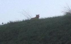 Jagd auf Phantom- Tiger bei Paris