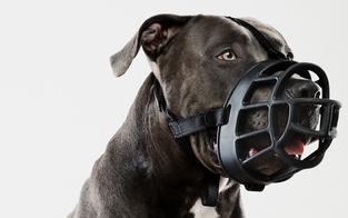 Regelverschärfung: Hundehalterverband zieht vor VfGH