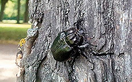 Hat ein kleiner Käfer geplante Reha-Klinik zu Fall gebracht?