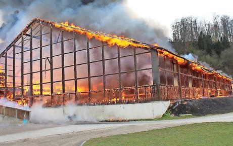 Sieben Pferde starben in Flammen auf Reitgestüt