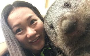 Aus für beliebte Wombat-Selfies